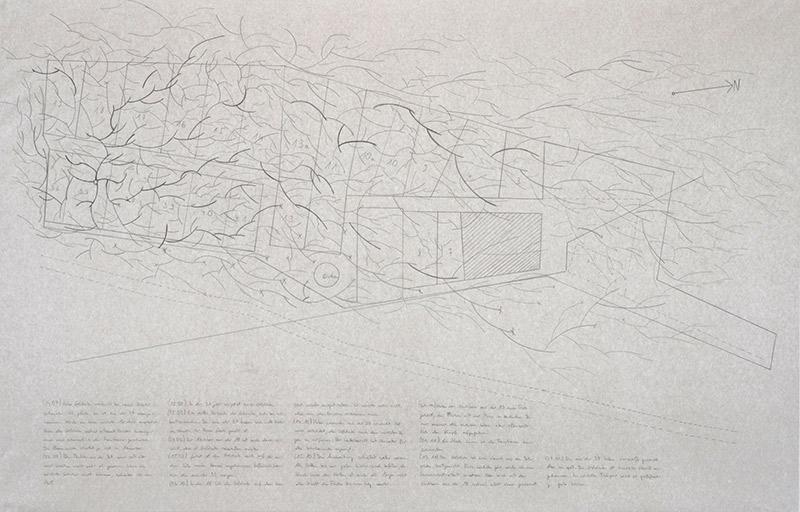 Johann Haberlah, Solidago canadensis oder über den Umgang mit Invasoren, 2020/21, Bleistift auf Papier und Sound, 90 × 140 cm, 3:12 Min, Detail, Foto: Merle Voigt